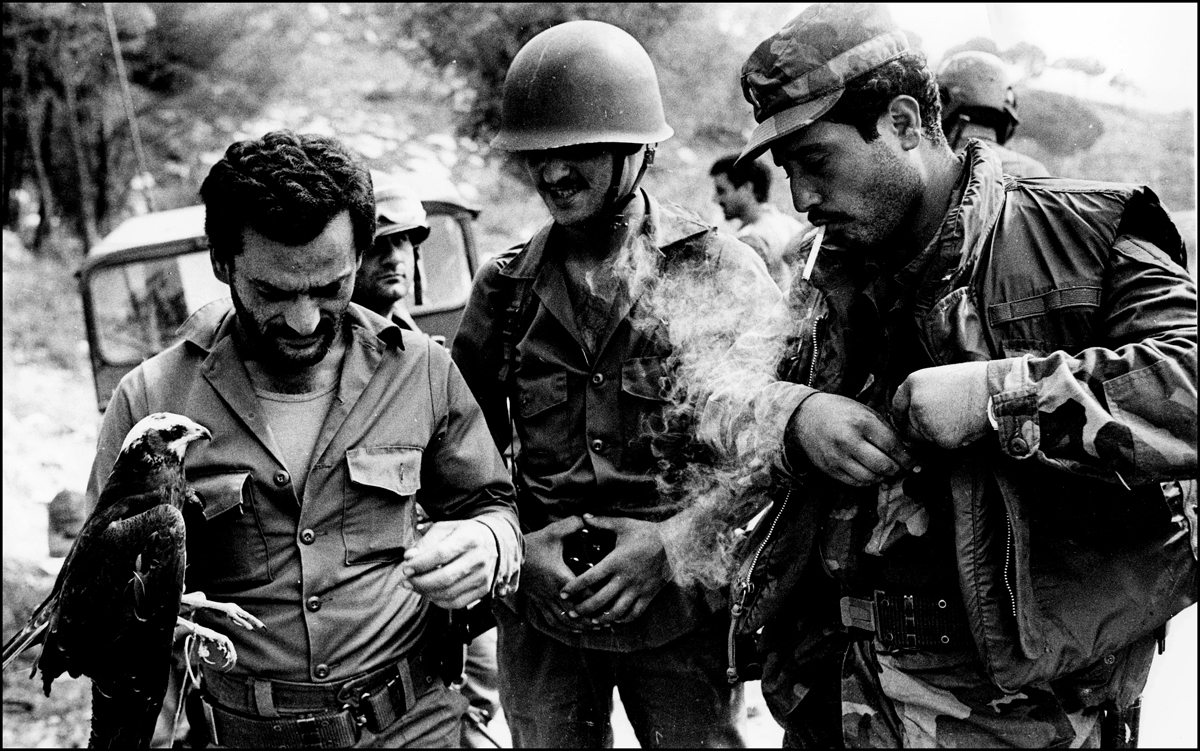 Lebanese army soldiers seen with their pet hawk. Chouf mountains 1983. : Lebanon 1981-2008 : BILL FOLEY